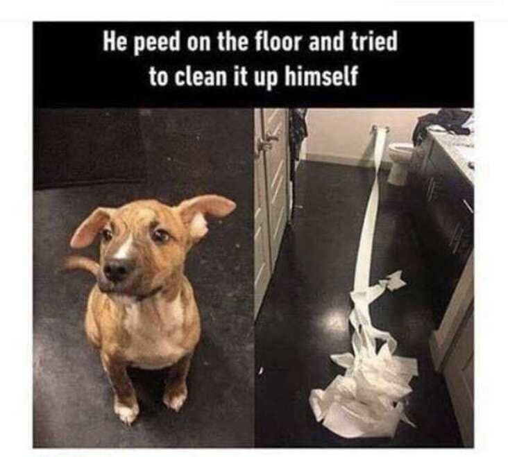 dog tried to clean up pee wholesome meme, wholesome meme, wholesome memes, meme wholesome, memes wholesome, clean wholesome meme, clean wholesome memes, cute wholesome meme, cute wholesome memes, sweet wholesome meme, sweet wholesome memes, meme that is wholesome, memes that are wholesome, uplifting wholesome meme, uplifting wholesome memes