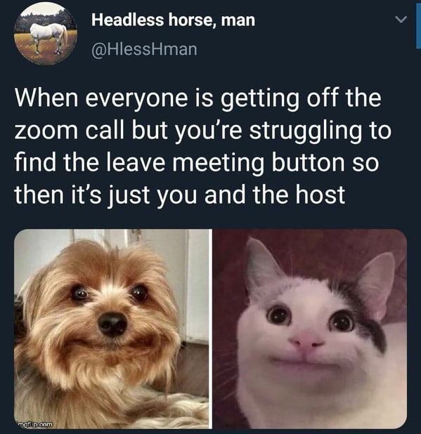 Funny Zoom Memes cat and dog awkward face and the tweet says when everyone is getting off the zoom call but you're struggling to leave and it's just you and the host.