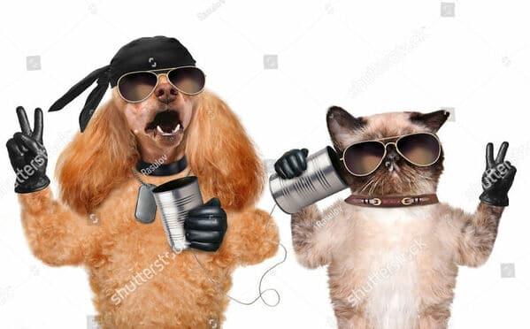 WTF stock photos dog and cat