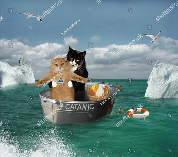 WTF stock photos cats reenacting Titanic