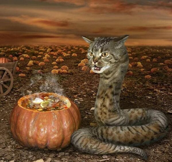 WTF stock photos cat cooking in a pumpkin but the cat looks like a snake