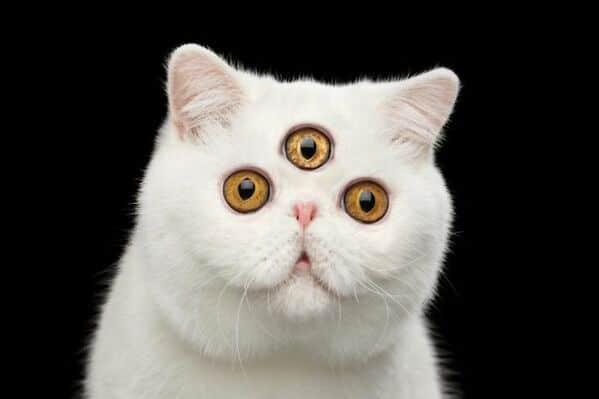 WTF stock photos three eyed cat
