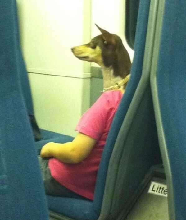 person on the train who looks like she has a dog for a head, Confusing pictures, confusing perspective reddit, funny accidental photos, weird funny perspective, play to the top of your intelligence, patterns and the brain