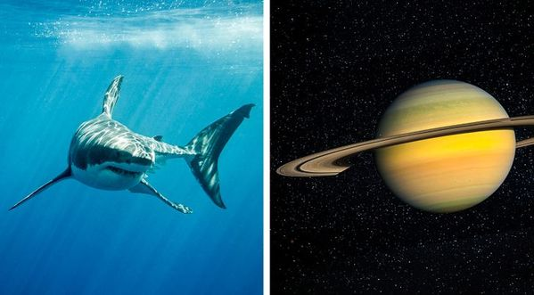 sharks and saturn side by side, Things that are older than you thought, facts about early inventions, interesting facts about every day objects