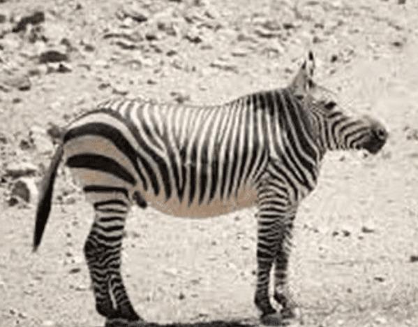 Animals without necks, no necks, no necked animals, nonecks, funny nature photos, funny wild animal pictures, Instagram, hilarious, weird, WTF